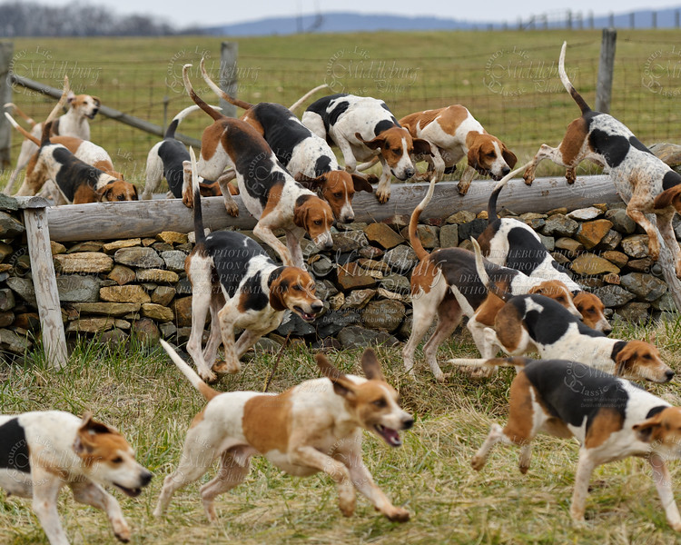 Piedmont Hounds-2011-Blue Ridge Farm