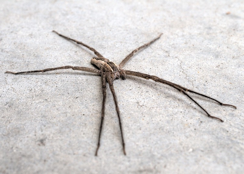 Spider on concrete t-map.jpg
