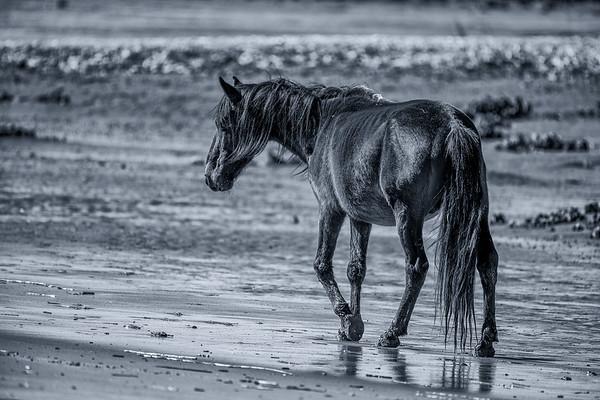 Cumberland Island (Black & White)