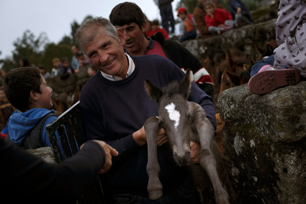 . Men grab a wild colt during the \'Rapa Das Bestas\' tradition in Mougas, northwestern Spain, Sunday, June 9, 2013. RRapa das bestas or Shearing of the Beasts is an ancient tradition dating from the 15th century and consists of gathering the wild horses in the mountains, placing them in a \'curro\' or corral, then shaving and branding them before releasing them in the mountains until next year. (AP Photo/Daniel Ochoa de Olza)