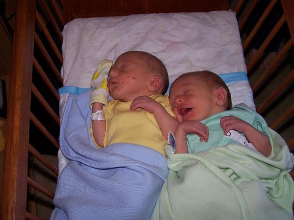 Angel's Babies