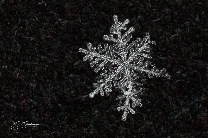snowflakes-1190.jpg