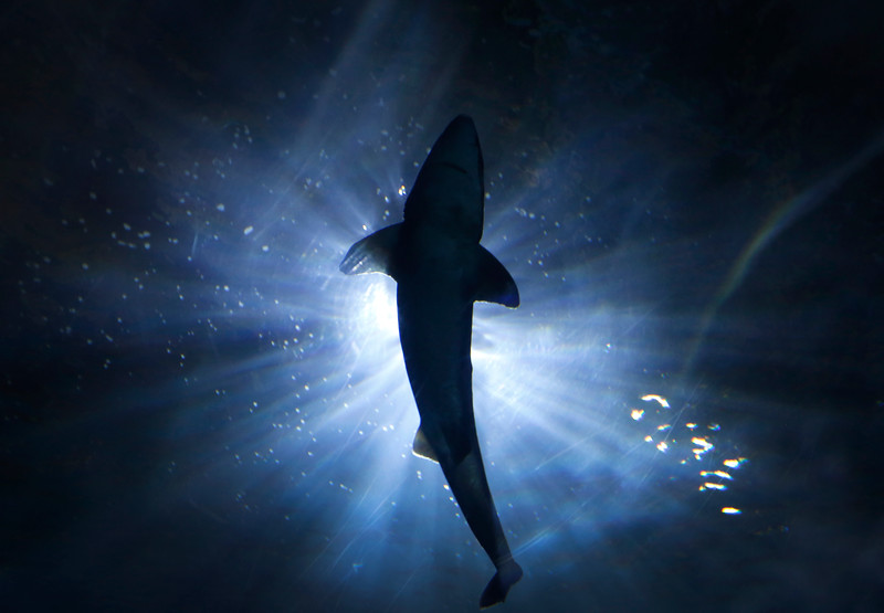 161231_Sharks.jpg