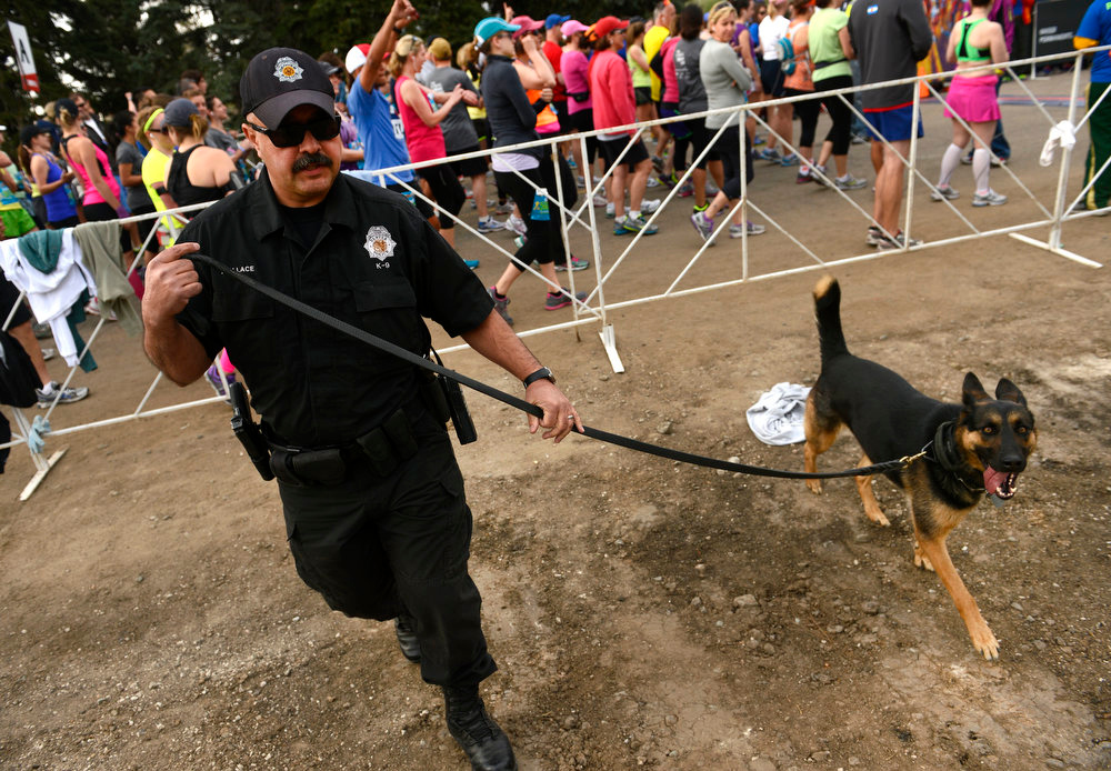 . Brian Wallace, a Technician with the DIA Bomb Dog Unit with the Denver Police Department, checks for suspicious items all along the start of the race with his dog Dina. The Colfax Marathon, the Half Marathon and the Urban Ten-Miler were held in City Park in Denver, CO on May 19th, 2013. The popular running events, sponsored by Kaiser Permanente, were sold out and thousands of runners took part in all three races.  Temperatures were cool with cloudy skies making for record setting times on both the marathon and the half marathon by the winners.  (Photo by Helen H. Richardson/The Denver Post)