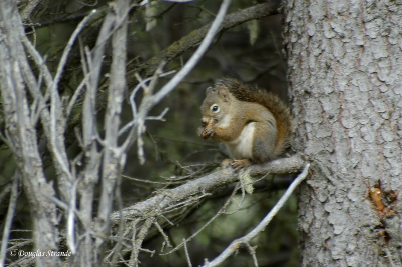 0509021058_Squirrel.jpg