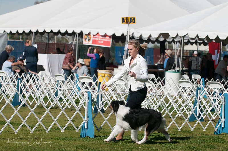 20170205_Australian Shepherds_Lost Dutchman Kennel Club-123.jpg