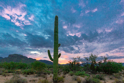 Sabino Canyon Nat'l Recreation Area