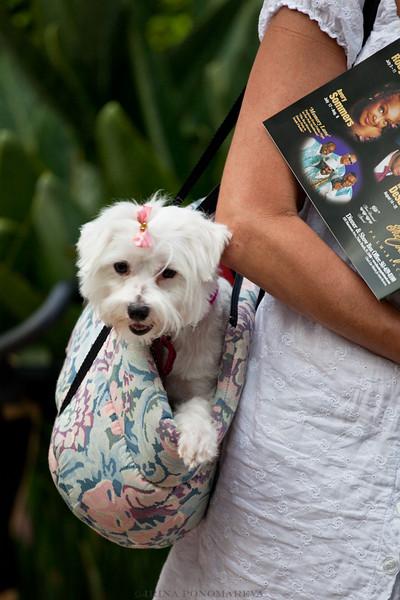 Palm Beach Doggie Fashion Show