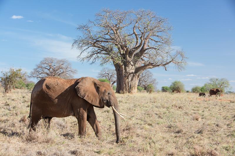 Africa - 102016 - 7936.jpg