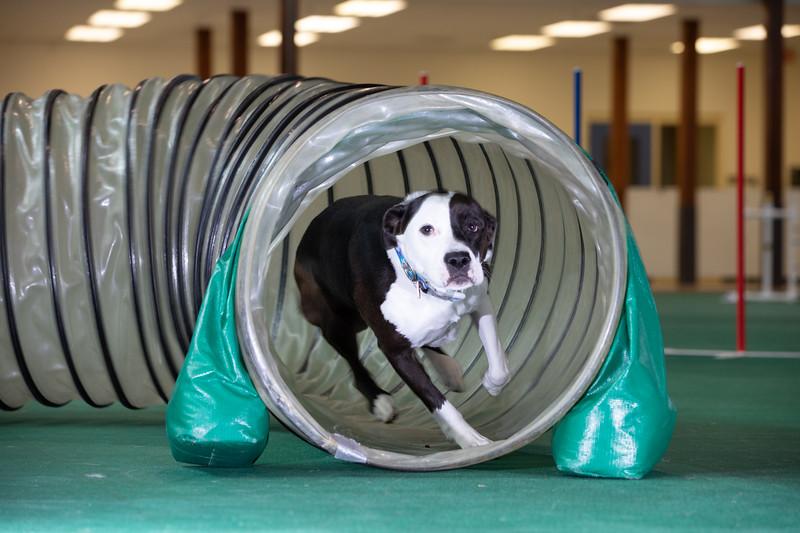 SPCA_Agility-71.jpg