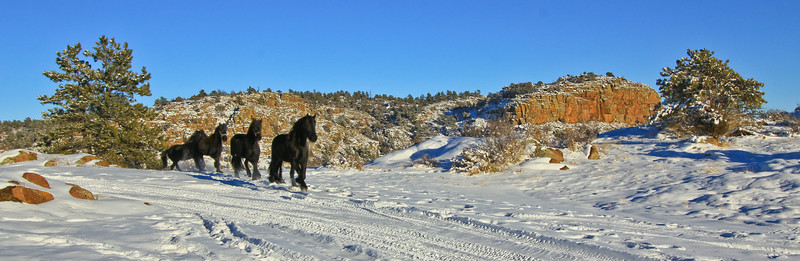 snowhorsesB (6 of 15).jpg