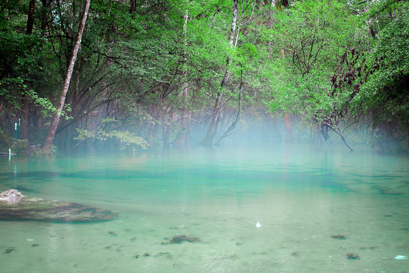 Natural Springs of North Florida.jpg