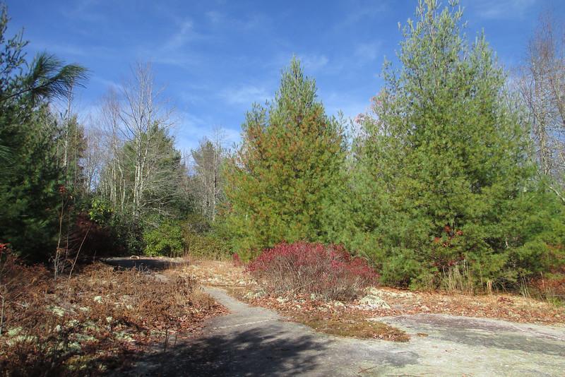 Little Green Trail - 4,050'