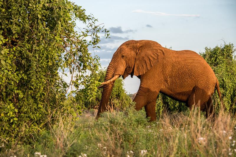 Samburu (57 of 70).jpg
