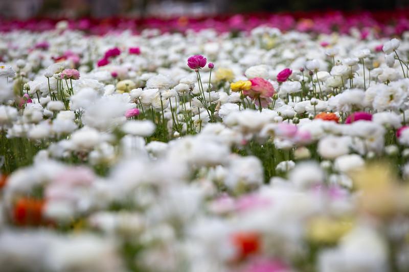 Spring Flowers B-463.jpg