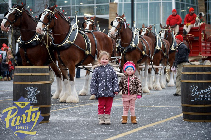Clydesdale Portraits 43.jpg