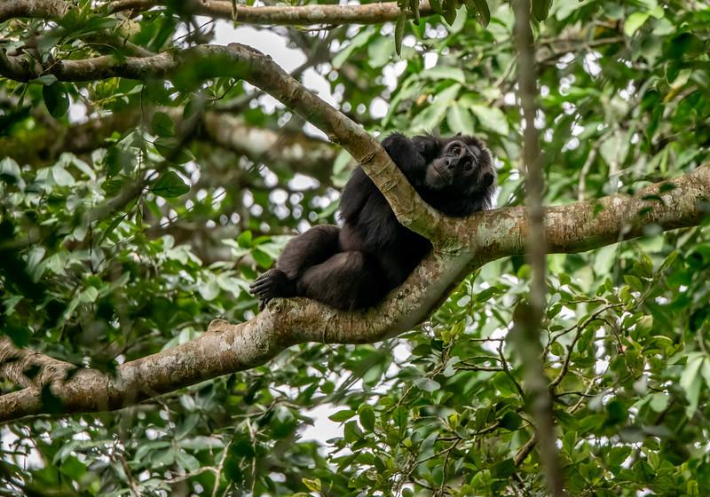 Uganda_T_Chimps-1036.jpg
