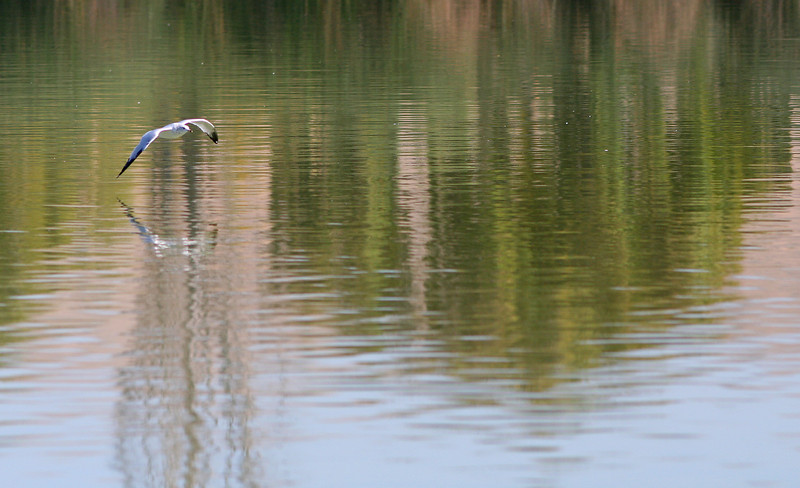 1806 Bird & Reflections.jpg