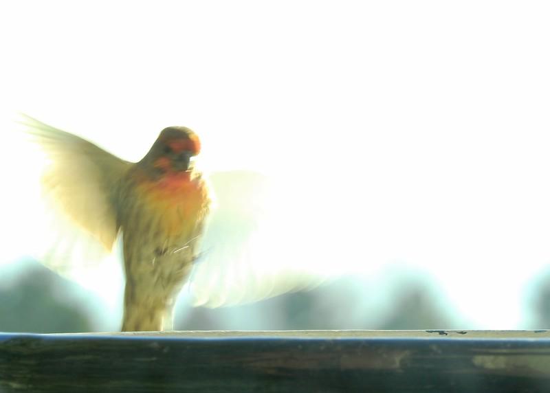 birds (116).JPG