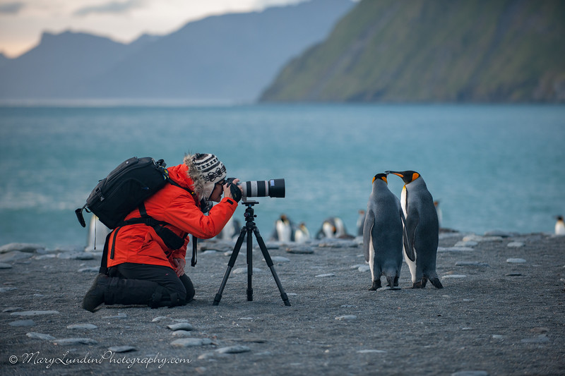 Antarctic-77