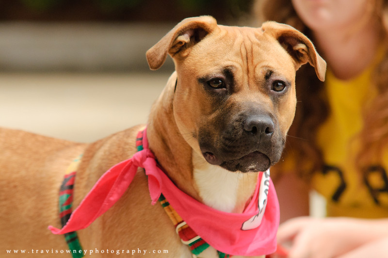 20110514 PetSmart Adoption Event-28.jpg