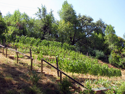 Kent Woodlands Vineyard