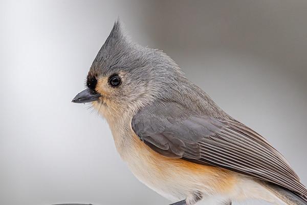 Bird Friends January 2021