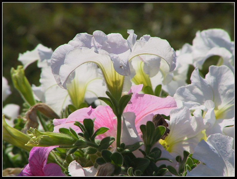 2002 Pappa fiori 47.jpg