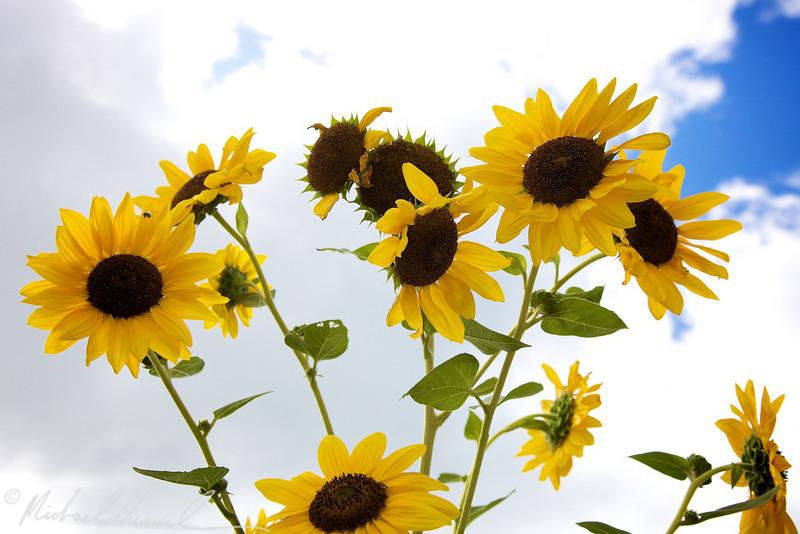 2009-08-30_14-51-21.jpg