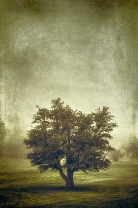 A Tree in the Fog 2 - $10