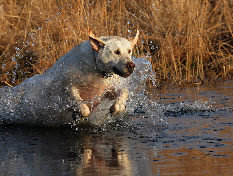 water retrieve.jpg