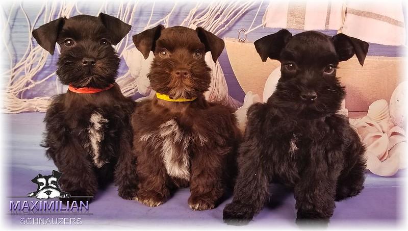 Annie Pups 009.jpg