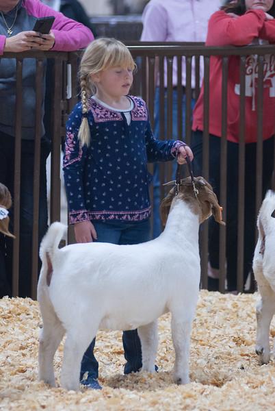 kay_county_showdown_goats_20191207-109.jpg