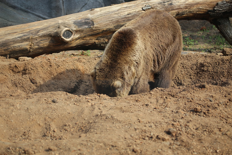 Zoo August 2014