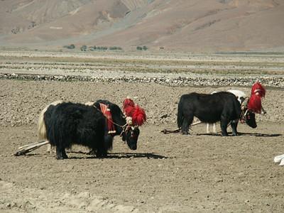 tibet-kailash-008.jpg