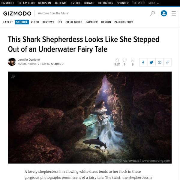 160126_Gizmodo_sharkShephedess_12.png