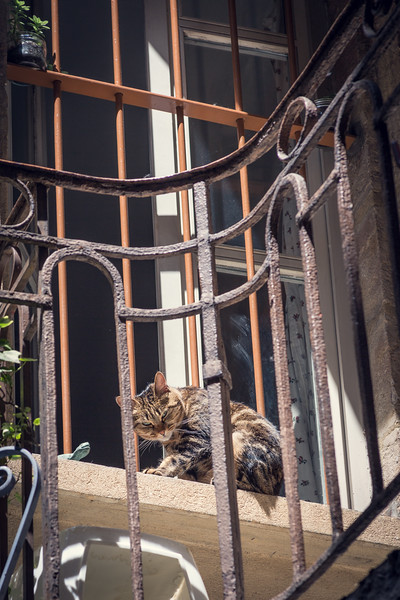 Cat on a balcony in a Traboule