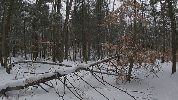 Acorn Town Forest 2-19-2021