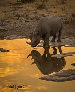 Critcally Endangered Black Rhinos