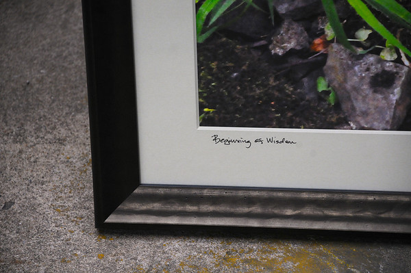 """Beginning of Wisdom"" by Will Pollock"
