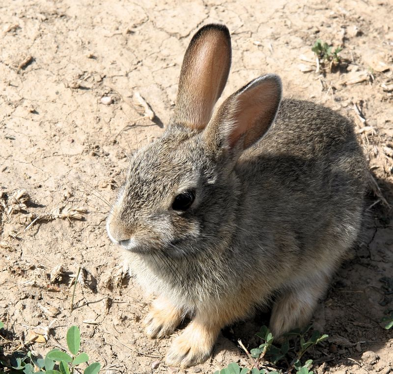 brave bunny.jpg