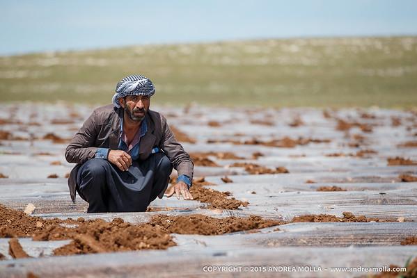 20150423_Urfa_Farmworkers