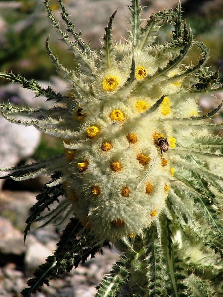 amh FLOWERS (1318).jpg