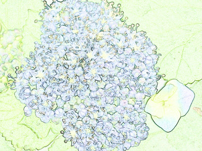 Floral Color Sketches
