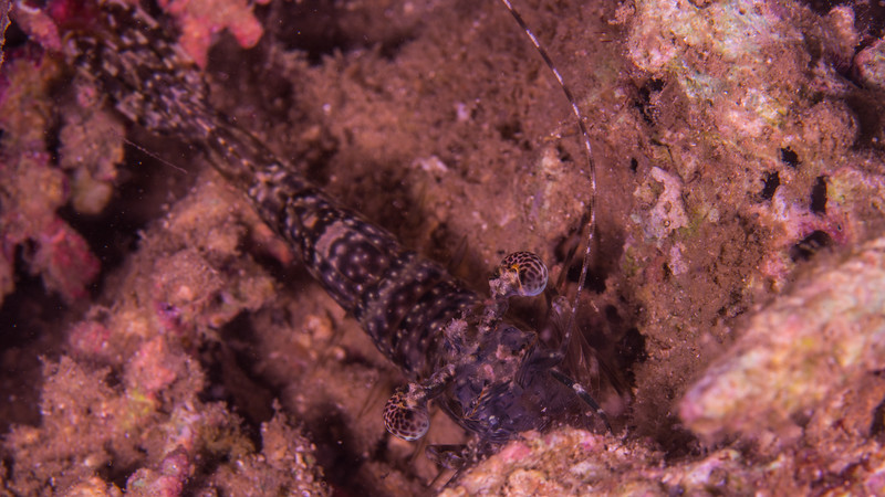 Taken at Jailolo Jetty divesite in Jailolo Island, North Maluku, Indonesia during our 8D7N excursion in March 2018