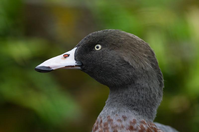 The Wildfowl & Wetlands Trust -Arundel