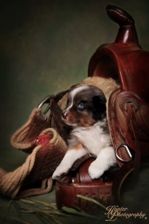 DJ Hawker puppies 2-24-2015