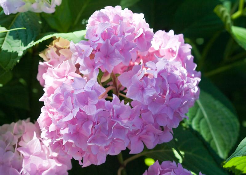 2009 06 30_NY Botanical Gardens_0649_edited-1.jpg