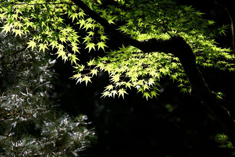 Portland Japanese Garden 6-3-11  1772.jpg