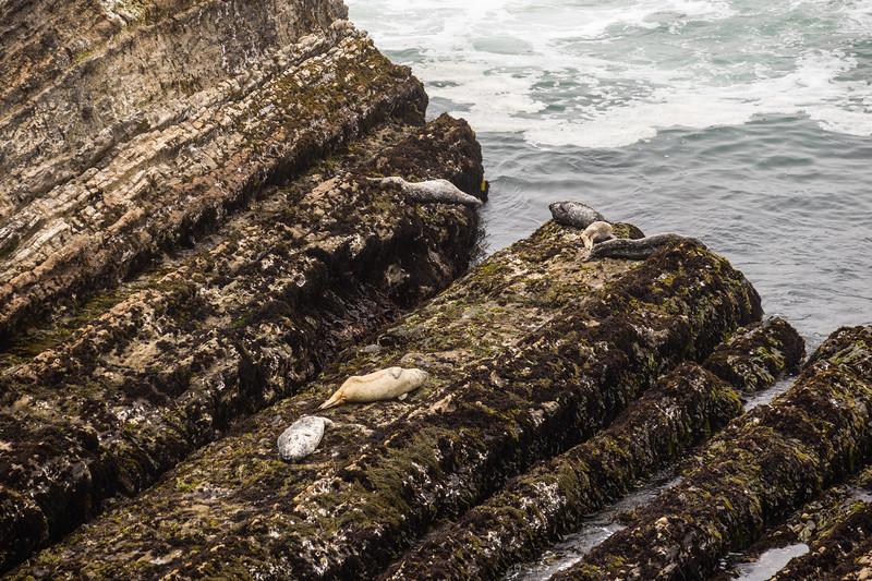 Seals on the rocks